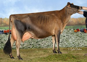 Pleasant Nook/Wr Tequila Vodka, 2nd Junior Yearling. Pictured is 2nd Dam, Arethusa On Time Vogue EX-94