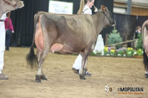 Pleasant Nook BC Marcelle, 3rd Place Junior 3 Year Old