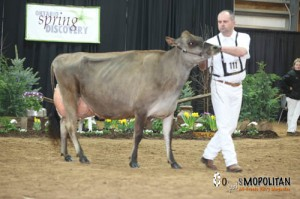 Pleasant Nook Candy Cane, 1st 4 Year Old and Grand Champion