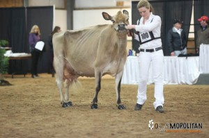 1st Place 5 Year Old & Reserve Grand Champion Pleasant Nook Sultan Jetta