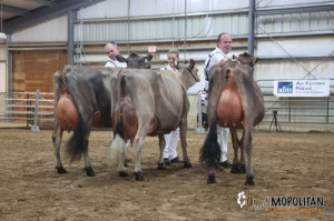 Grand Champion Pleasant Nook Candy Cane & Reserve Grand Champion Pleasant Nook Sultan Jetta