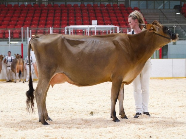 Pleasant Nook Apple Muffin was the HM Grand Champion, Intermediate Champion and 1st Junior 2yr Old at the Stratford Championship Show